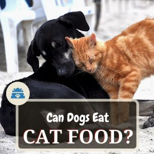 can dogs eat cat food
