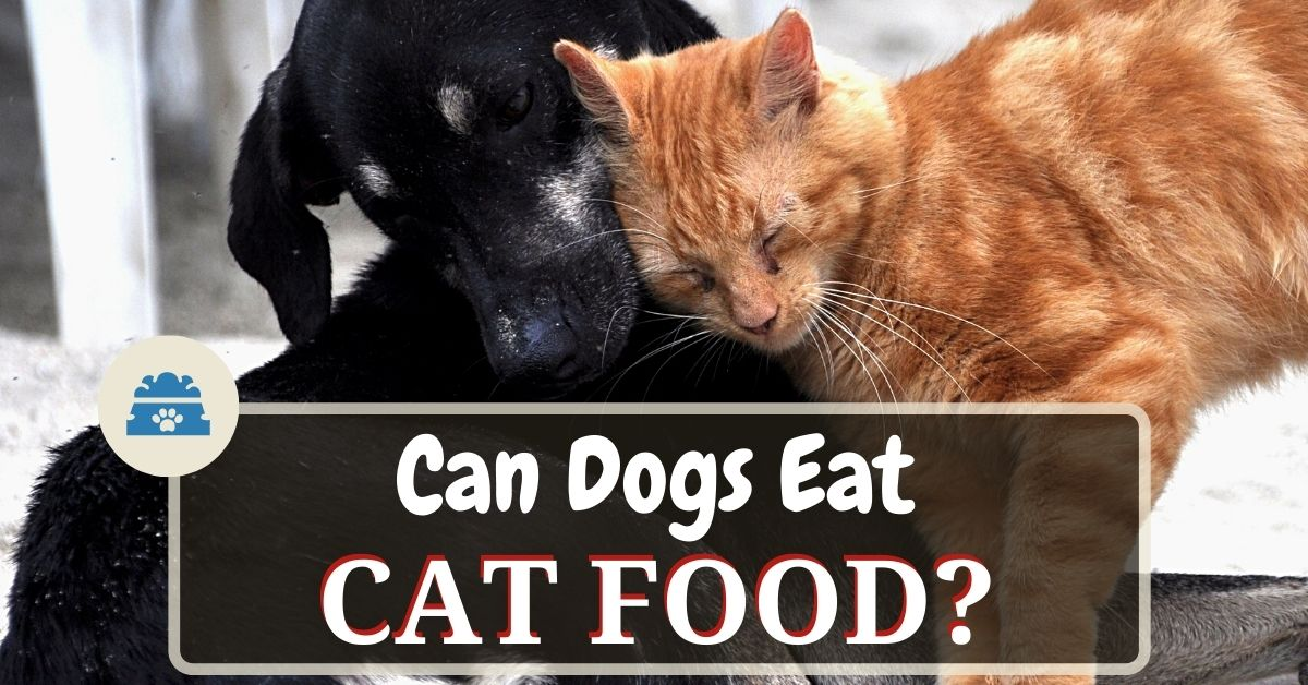 Can Dogs Eat Cat Food? Is It Safe For Dogs To Eat Cat Food ...