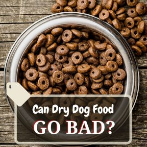 can dry dog food go bad