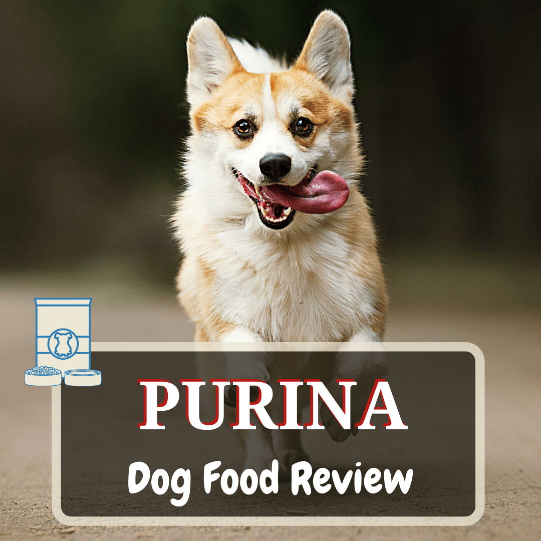 purina dog food review featured