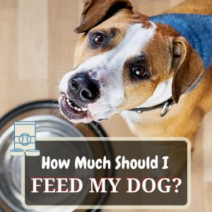 how much to feed dog