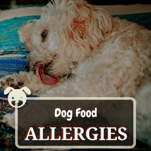 dog food allergies